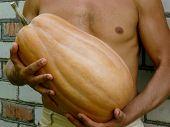 fresh harvested butternut pumpkin