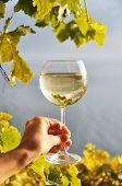 Wineglass in the hand against vineyards in Lavaux region, Switzerland