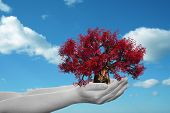 Concept or conceptual human man or woman hand holding a red spring tree and blue sky with clouds eco