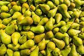 Just Picked Pears From Close