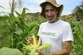 Organic farming: portrait of an eco farmer showing corn inside the plantation