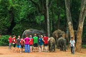 Tourists feed Elephants in Chiang Mai - Thailand