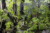 pic of typhoon  - Fallen trees in a tropical garden after a strong typhoon