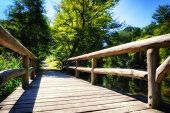 Wooden Bridge Over Forest River