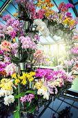Multicolor Orchids In Flower Pots