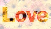 stock photo of gerbera daisy  - word love made from gerbera or Barberton daisy flower picture - JPG