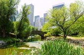 Central Park The Pond Manhattan New York US
