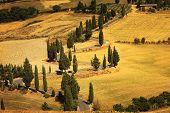 Cypress Tree Scenic Road In Monticchiello Near Siena, Tuscany, Italy.