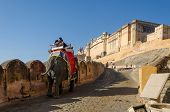 Jaipur, India - December 29, 2014: Decorated Elephant Carries Tourists To Amber Fort