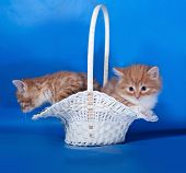 Two Fluffy Red And White Kitten Sitting In Basket On Blue