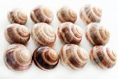 Snails isolated on white