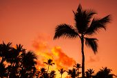 Coconut Palm Trees Silhouettes Over Bright Red Sky