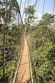 picture of canopy  - Canopy walkway in Kakum National Park Accra Region Ghana West Africa - JPG