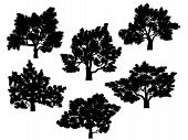 foto of elm  - Set of vector silhouettes of oak trees with leaves - JPG