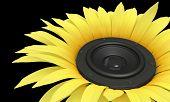Sunflower - Loudspeaker