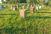 Summer Bee-garden With Several Hives