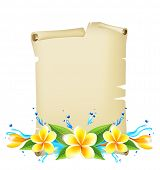 Summer time background with frangipani flowers
