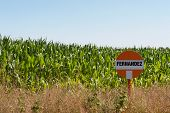 stock photo of biogas  - Biogas corn field for the harvest of a biogas plant - JPG