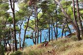 Wild Beautiful Nature And Sea In Croatia