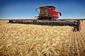 picture of combine  - Germany  - JPG