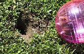 Hamster in pink ball near gopher hole
