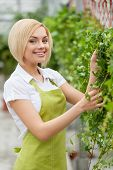 Woman Gardening. Beautiful Young Woman In Apron Gardening And Looking At Camera