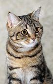Cat's portrait