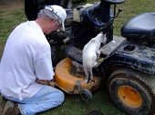 Senior Handy-Man Fixing Lawn Mower With Helper