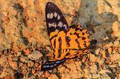 pic of moth  - Close up of moth - JPG