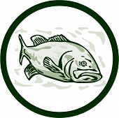 stock photo of bass fish  - Illustration of a largemouth bass fish facing front side set inside circle done in cartoon style on isolated background - JPG