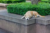 stock photo of forlorn  - Brown dog looking away and lying in park - JPG