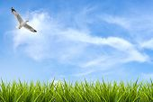image of grass bird  - field of grass under sky and flying bird background - JPG