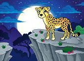 picture of cheetah  - Cheetah theme image 2  - JPG