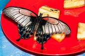 stock photo of butterfly  - Butterfly Papilio Swallowtail butterflies are large colorful butterflies in the family Papilionidae - JPG