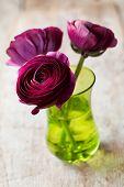 picture of buttercup  - Beautiful purple buttercups  - JPG