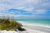 pic of sea oats  - Beautiful Sand Dunes and Sea Oats on the Coastline of Anna Maria Island Florida - JPG