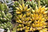 pic of bunch bananas  - Fresh banana bunches in a tropical market in Myanmar - JPG