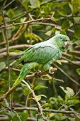 pic of rainforest  - Close up shot of green parrot in the amazon rainforest - JPG