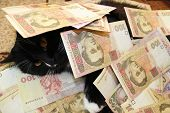 foto of cat-tail  - black cat lying and covered with Ukrainian money - JPG