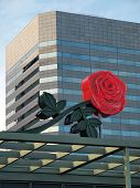 stock photo of portland oregon  - A symbol of the city of roses Portland Oregon - JPG