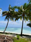 Idyllic tropical beach on Rarotonga