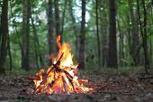 picture of pain-tree  - Bonfire in the forest - JPG