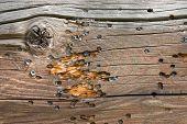 Marcas de bala de arma de airsoft na parede de madeira resistiu