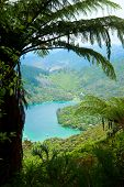 Marlborough Sounds como visto da trilha de Queen Charlotte