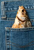 Blue jeans pocket with dried fish