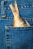 Blue jeans pocket with dried fish tail
