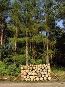 woodpile (round)
