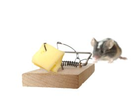 stock photo of pest control  - one mouse and trap on white background - JPG