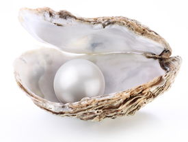 stock photo of pearl-oyster  - Image of a white pearl in a shell on a white background - JPG