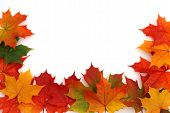 Colorful Maple Leaf Frame